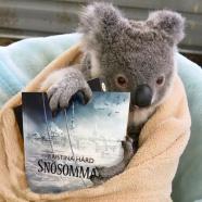 koala och bok